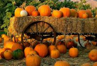 Some things about Pumpkins